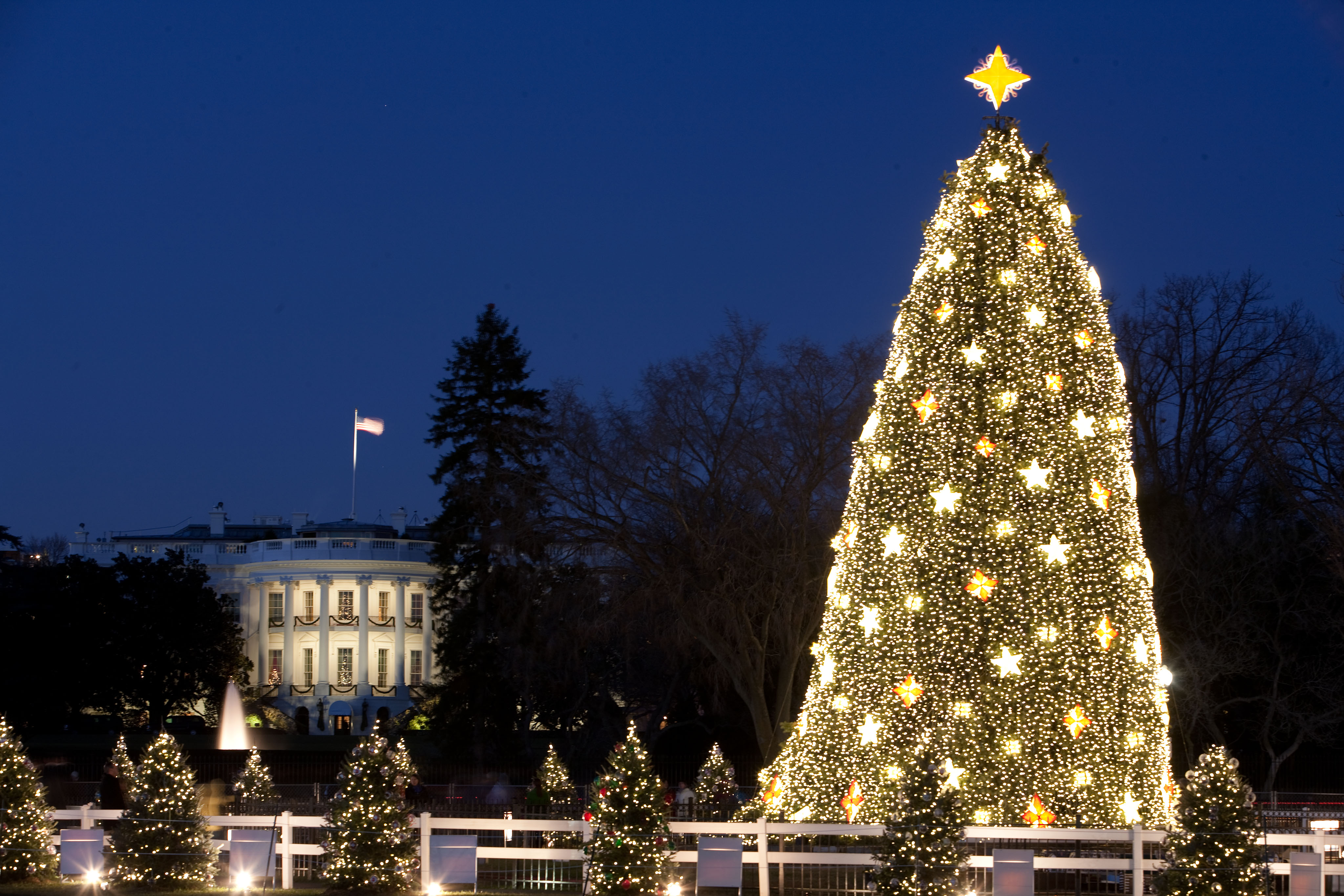 Beautiful Dc Christmas Tree Part - 11: File:White House And The National Christmas Tree In Washington, D.C., Dec.