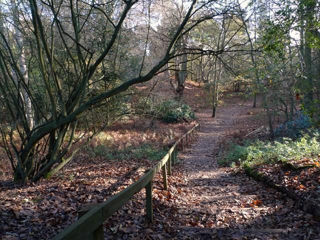 Woodland at The Lodge - geograph.org.uk - 1597706