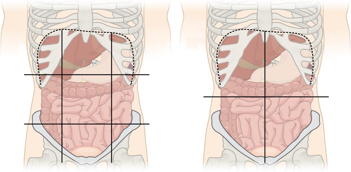 quadrants and regions of abdomen