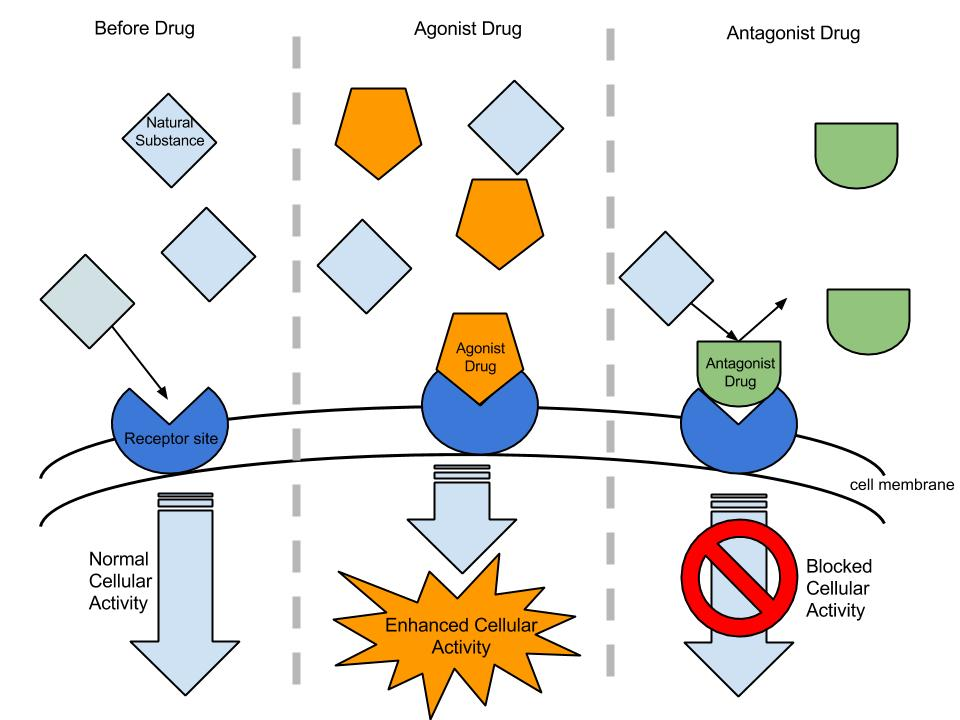 Combined effects of drugs, pharmacology.