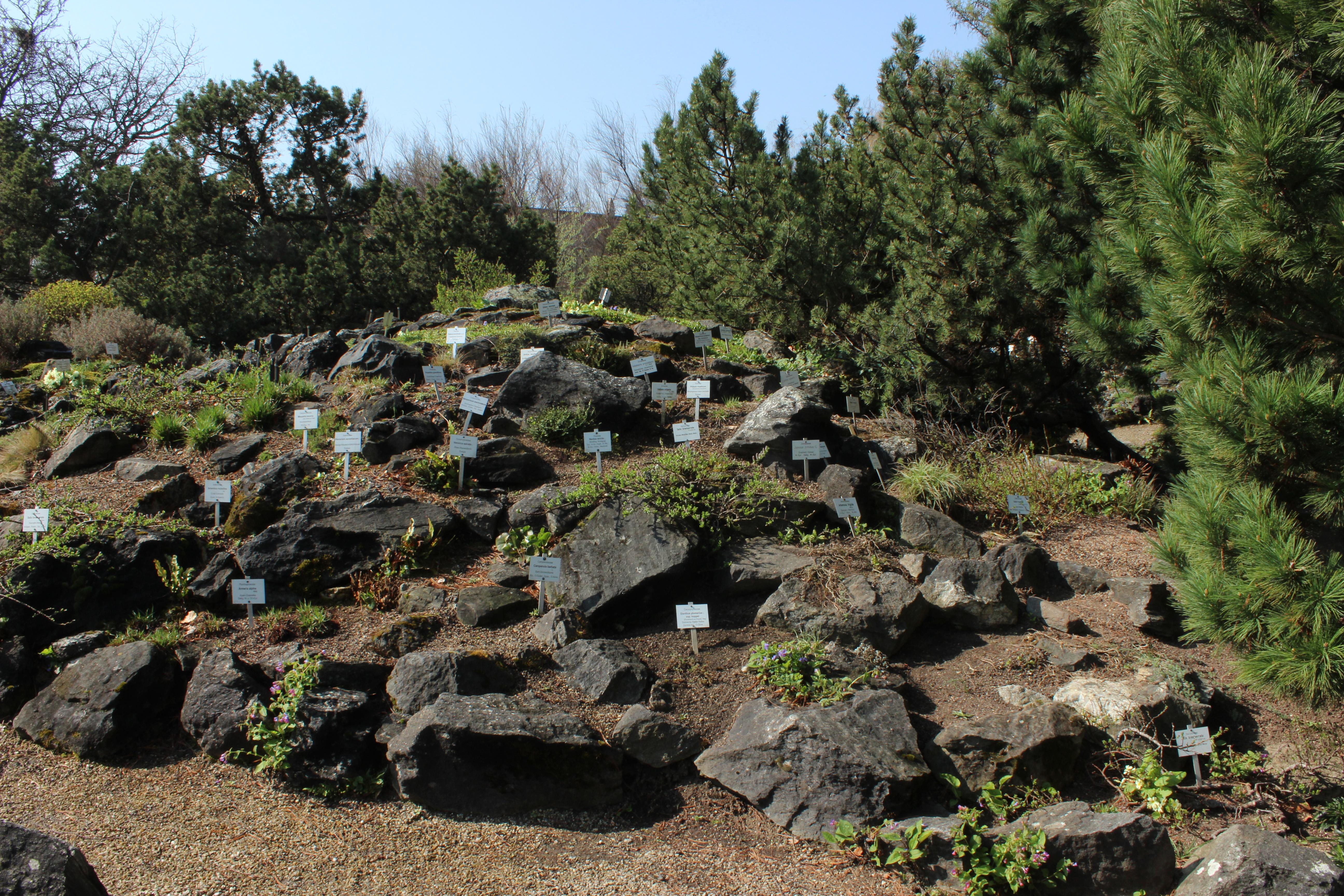 Fabelhaft Datei:Alpinum Botanischer Garten Wien.jpg – Wikipedia &LO_03