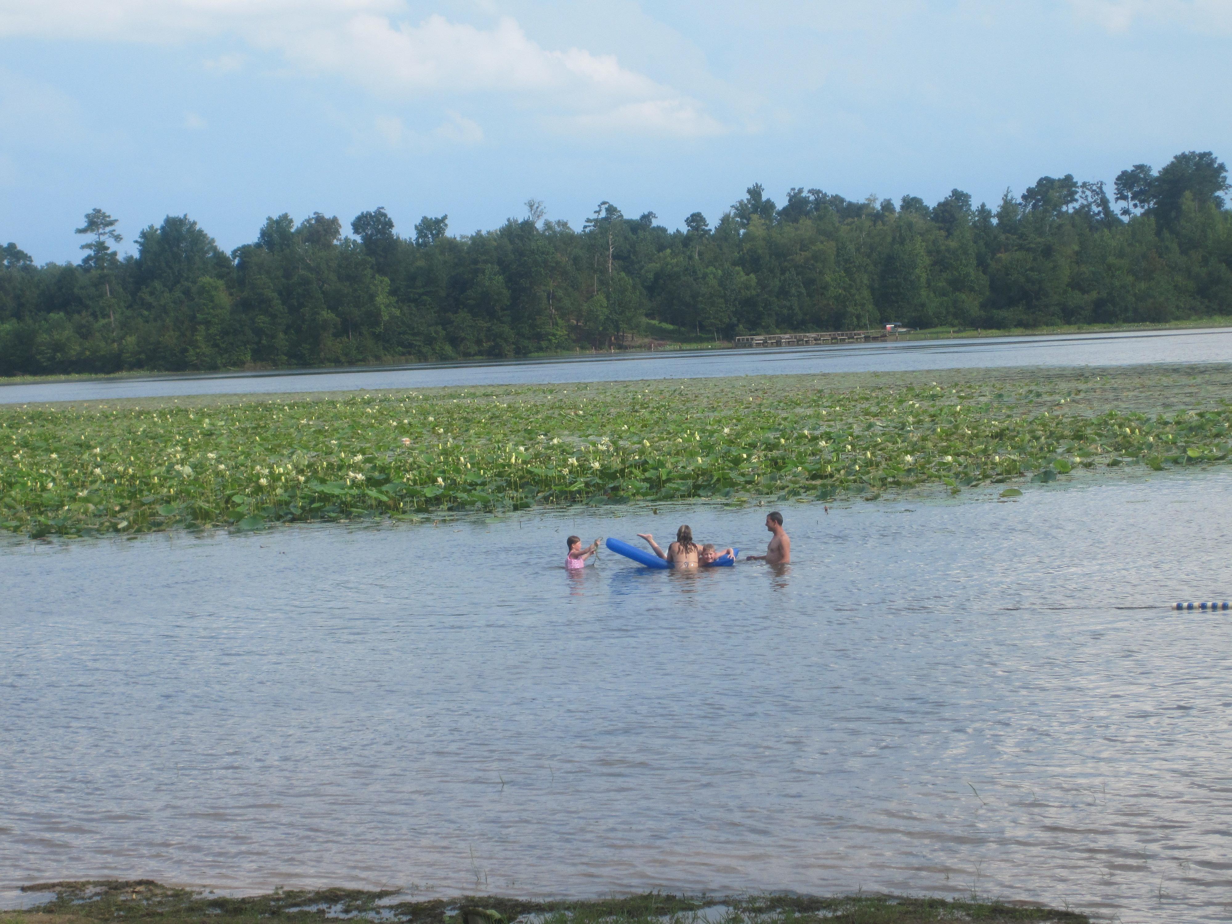 File American Lotus At Caney Lakes Minden La Img 2181