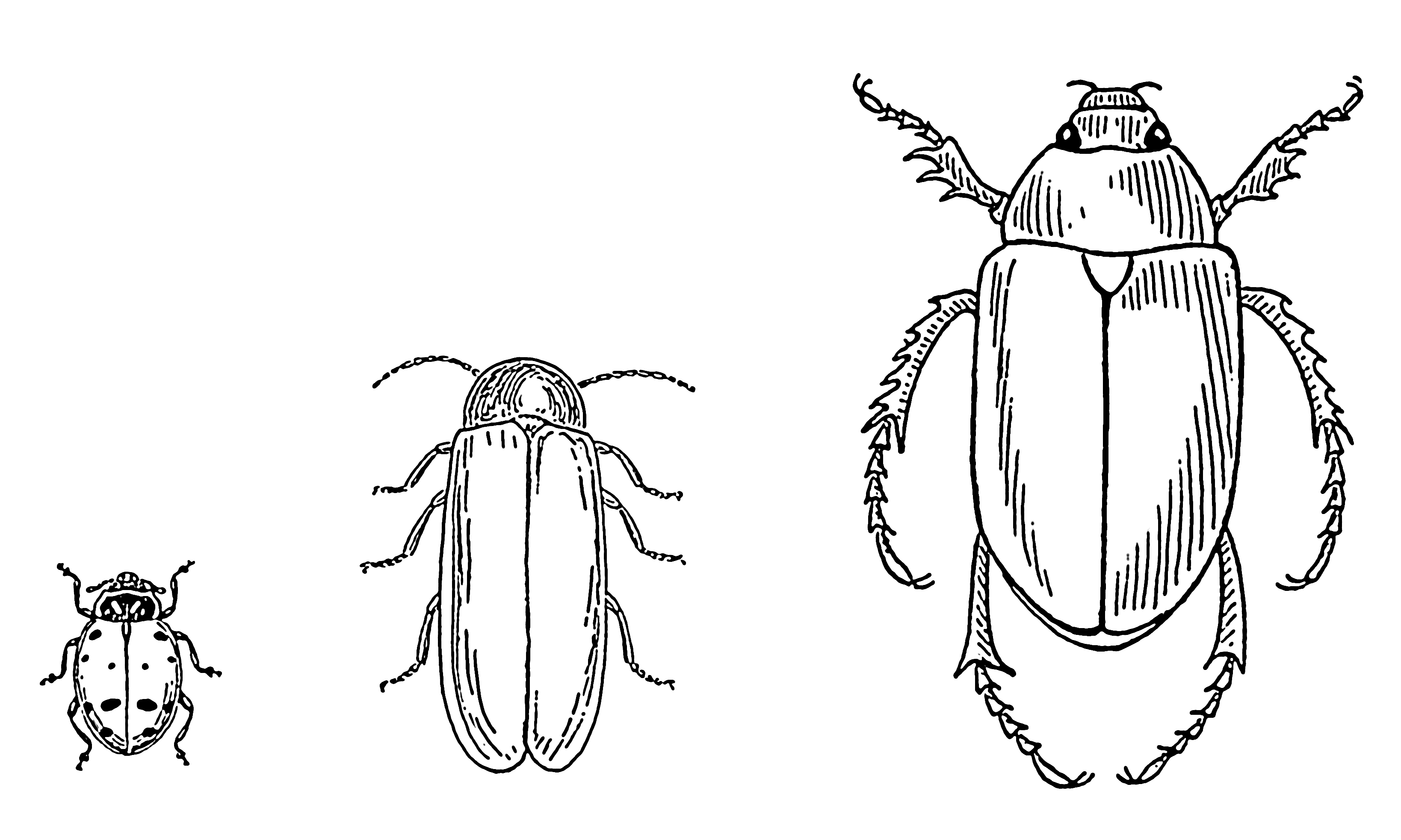Image Result For Insects Coloring Pages