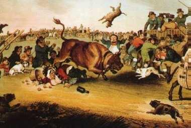 Bull_running.jpg