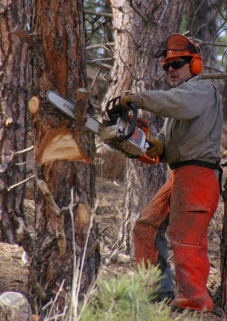 Tractor Man On Cutting Trees : Chainsaw safety clothing wikipedia