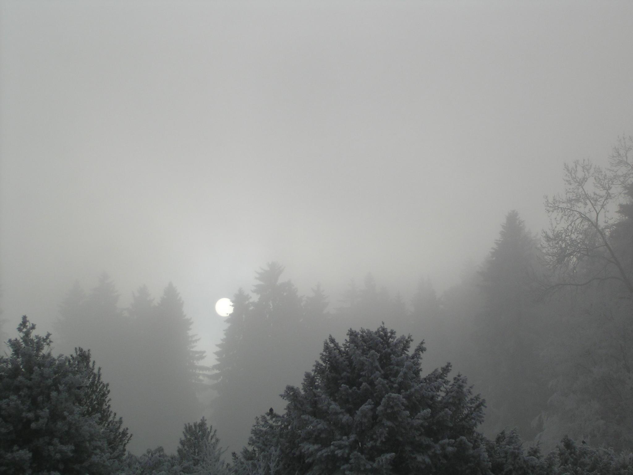 nebel englisch