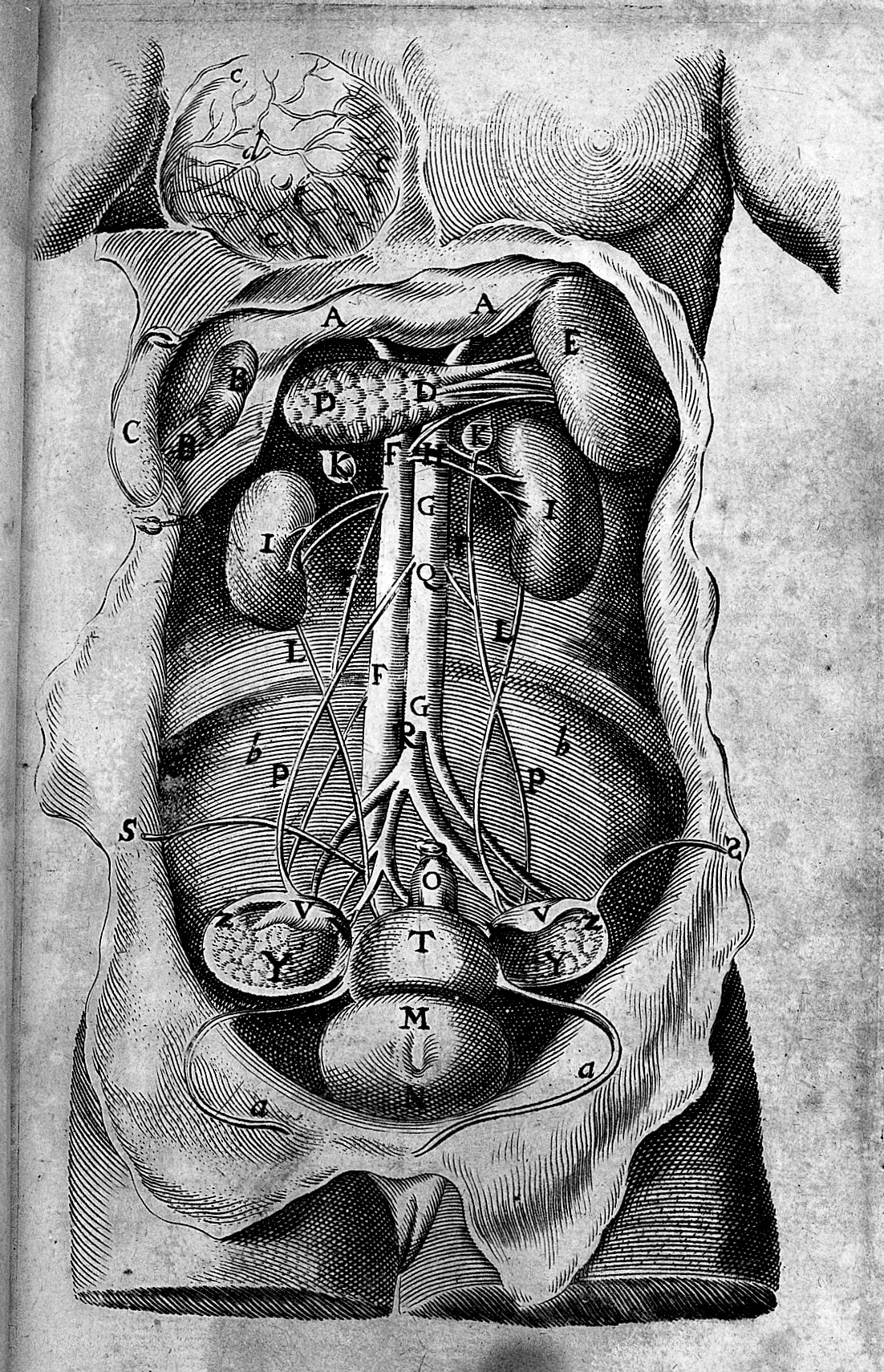 File:Complete midwife\'s practice..., 1680; female anatomy Wellcome ...