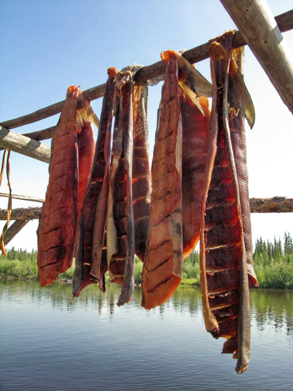 file drying salmon jpg wikimedia commons