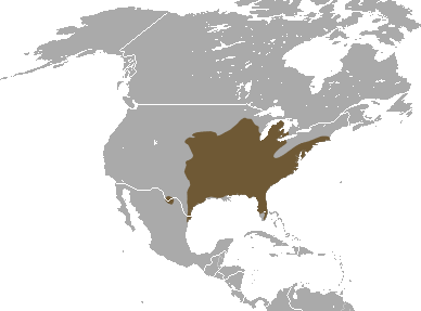 English: Eastern Mole (Scalopus aquaticus) range