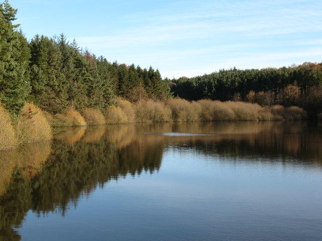 Eastern arm of Swinsty Reservoir - geograph.org.uk - 1050180