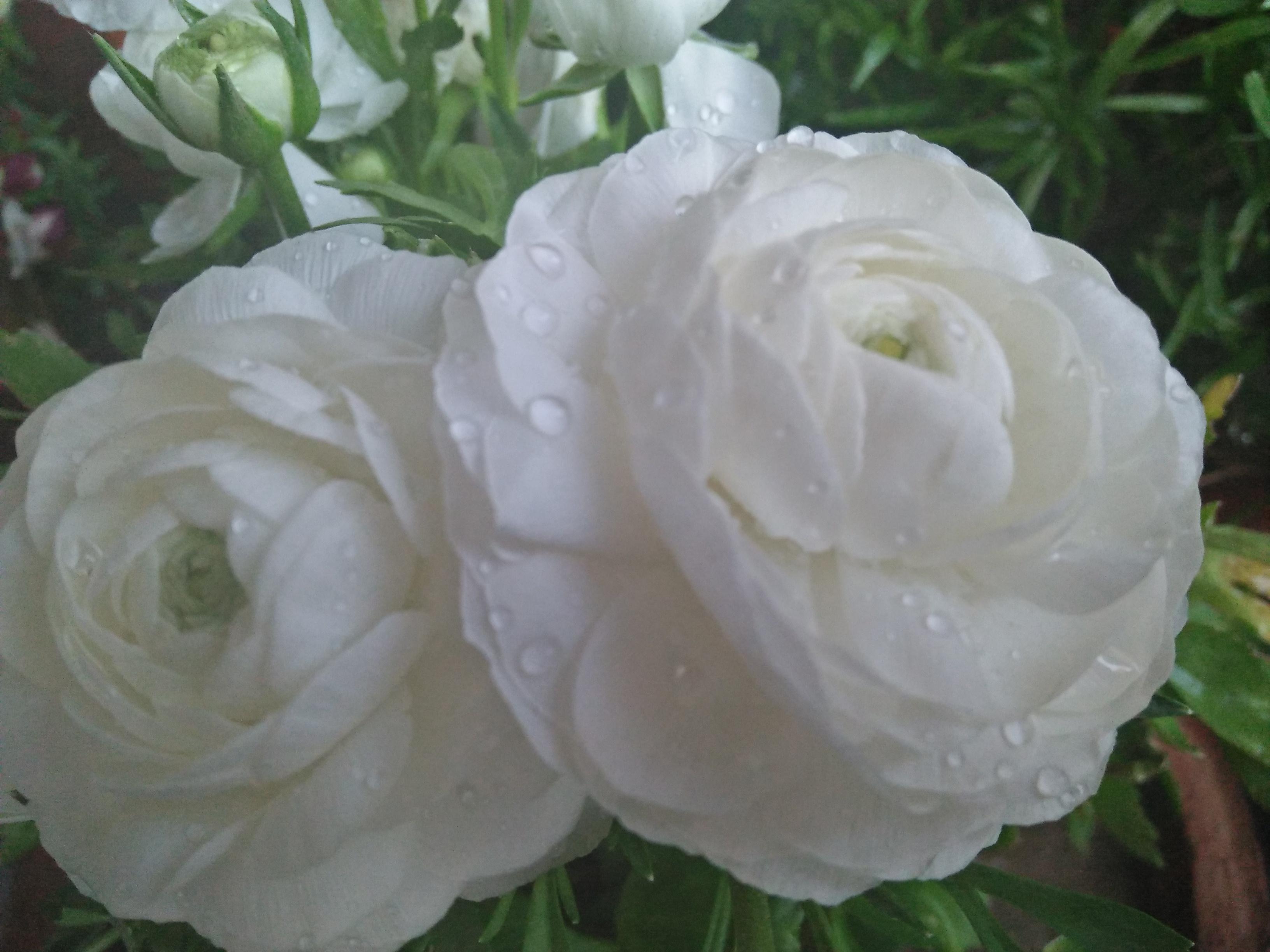 Filegood Morning Garden Flowersjpg Wikimedia Commons
