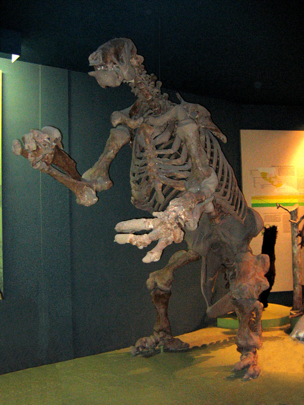 File:Ground Sloth.jpg