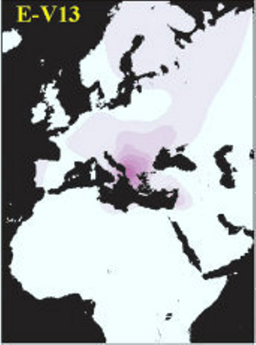 Genetic Map Of When Dogs And Cats Branched Off