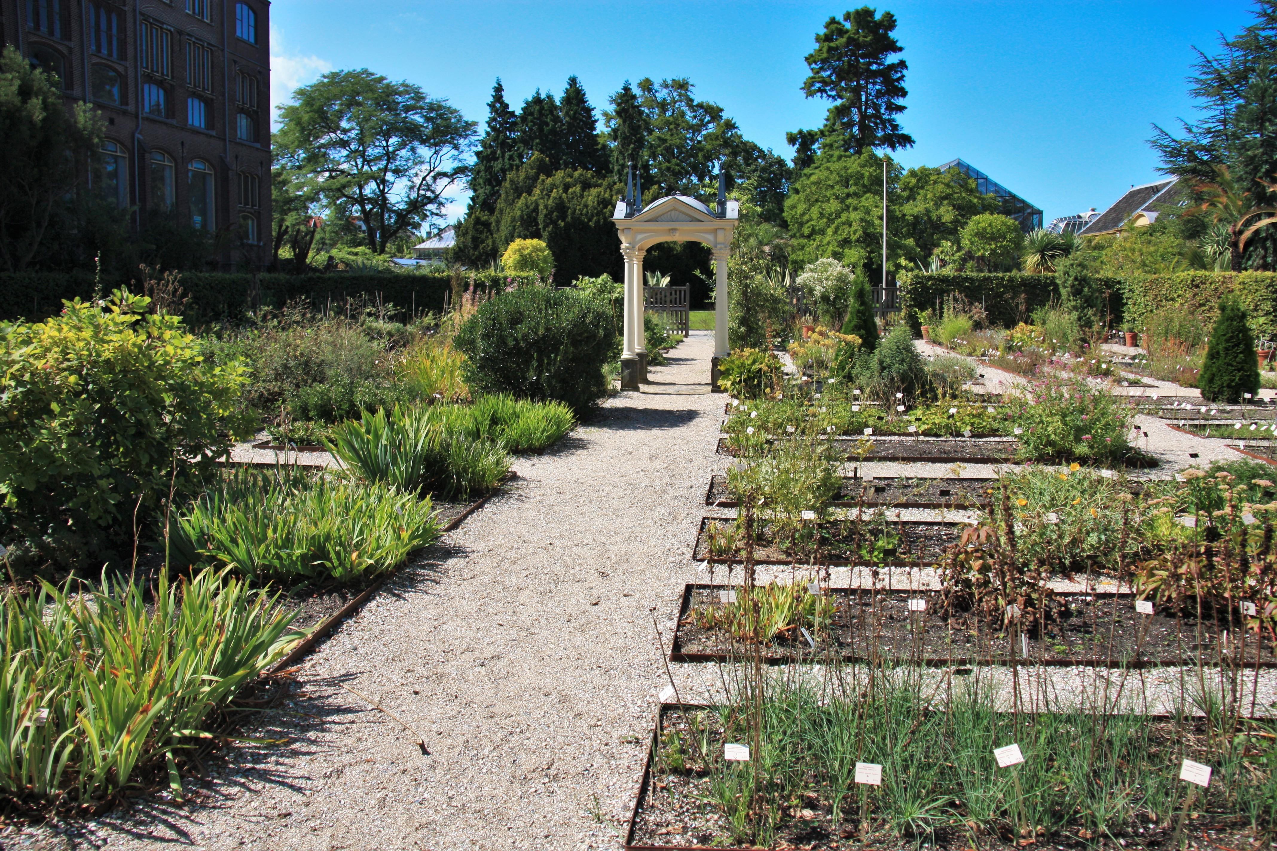 Botanische Tuin Leiden : Файл hortus botanicus leiden clusius garden g u Вікіпедія