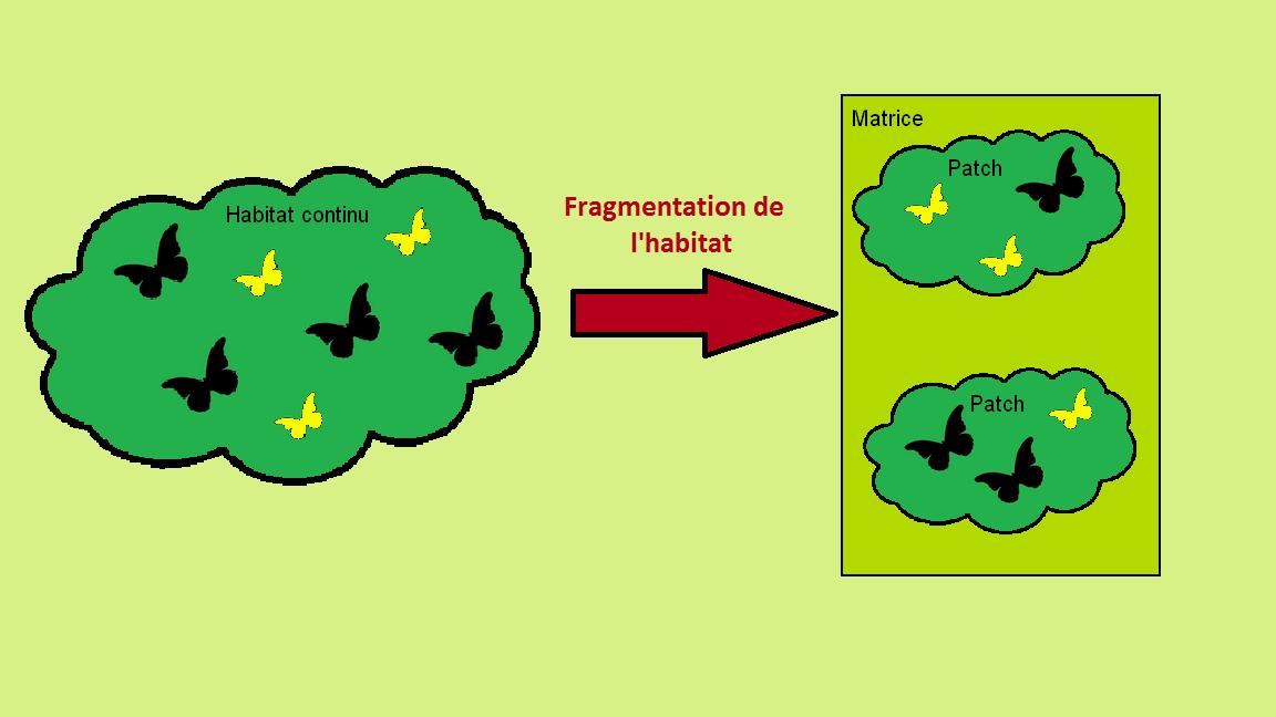 U00c9volution En R U00e9ponse  U00e0 La Fragmentation Des Habitats