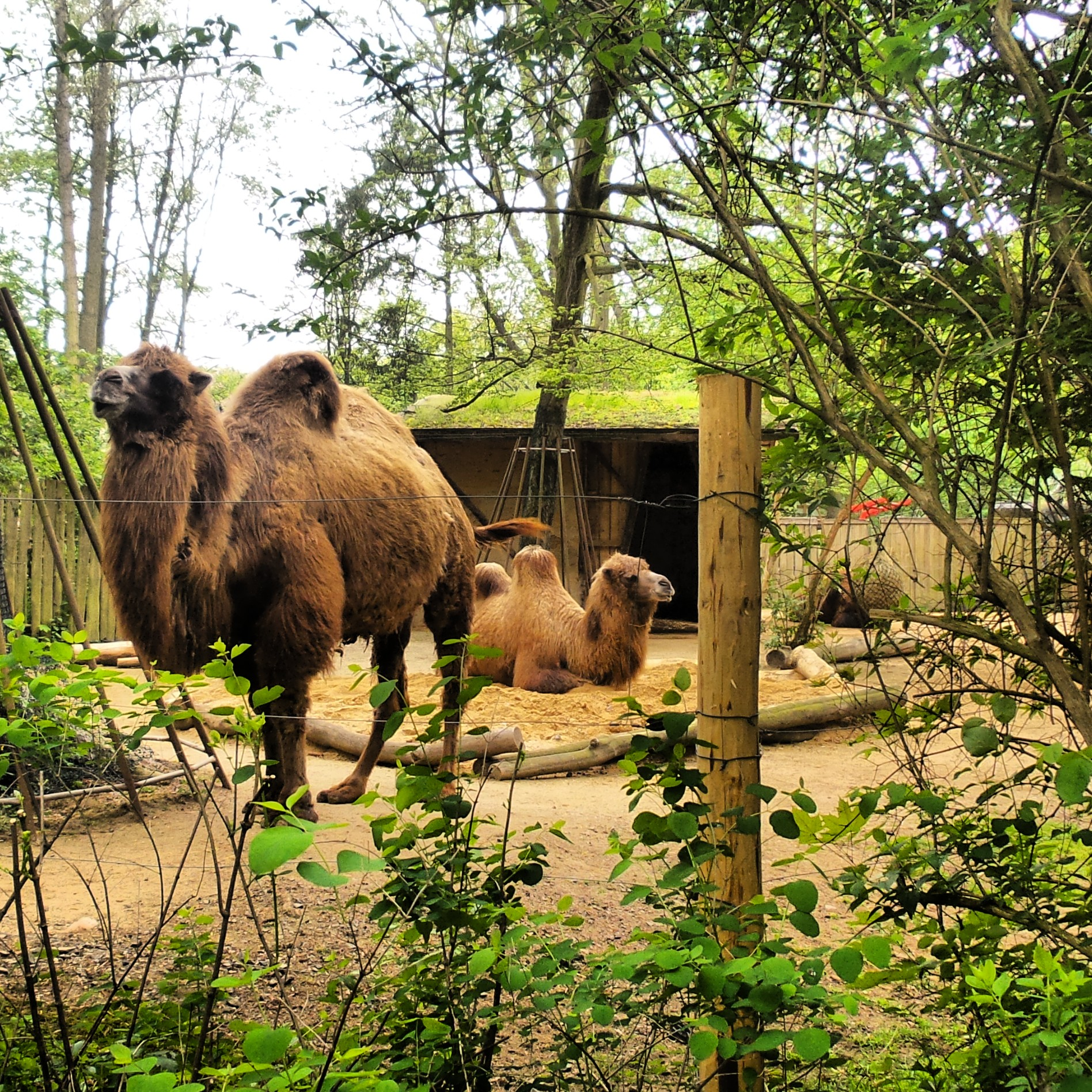 Im Tierpark Zittau  2014 05 05 17 17