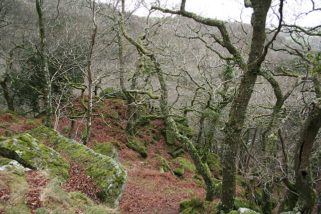 Meavy, Dewerstone Wood - geograph.org.uk - 653525