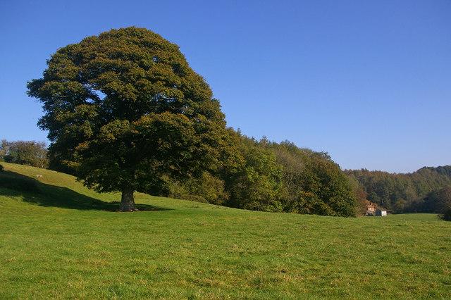 Oak Tree Cottage Bed And Breakfast Ashford