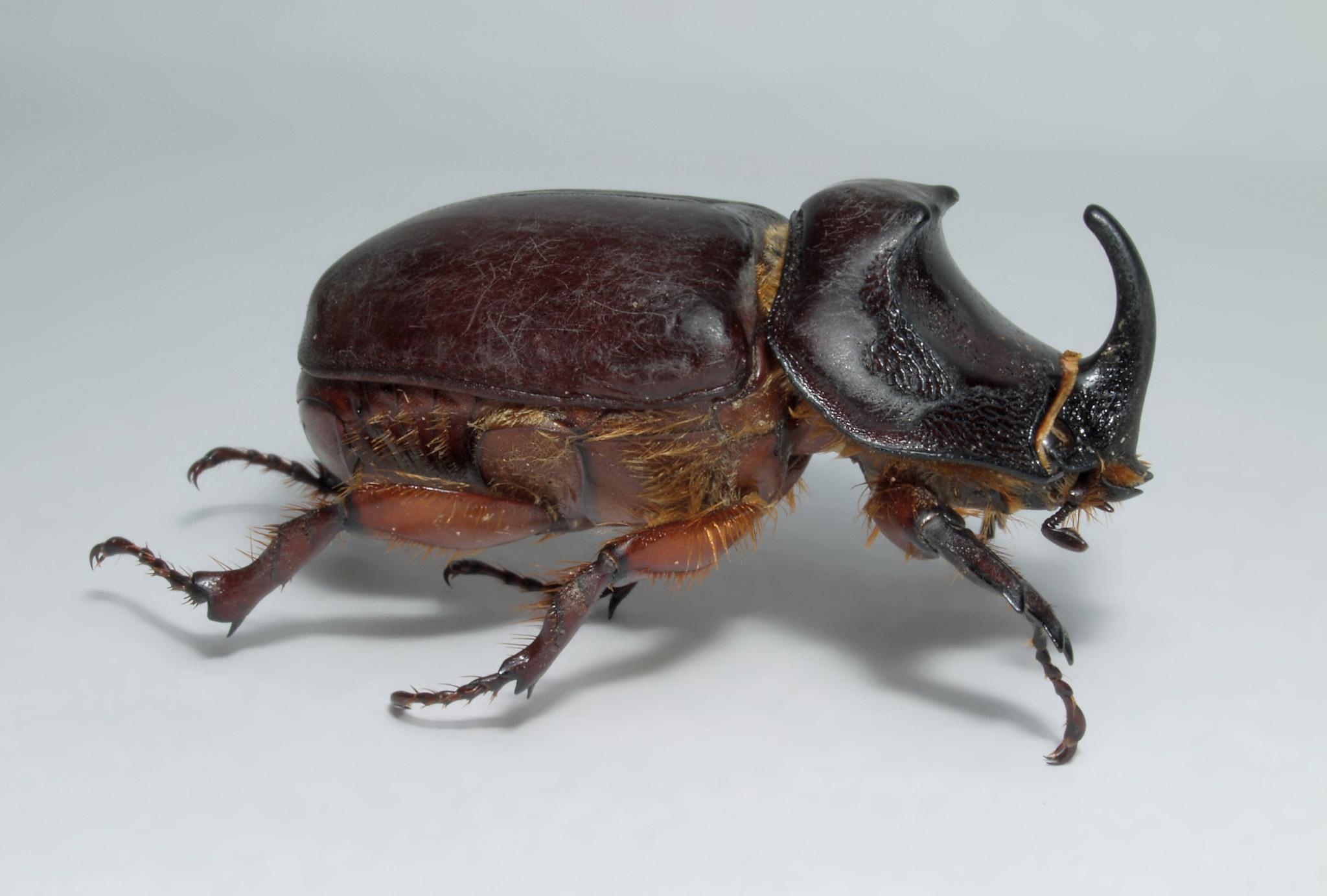 Картинки майский жук
