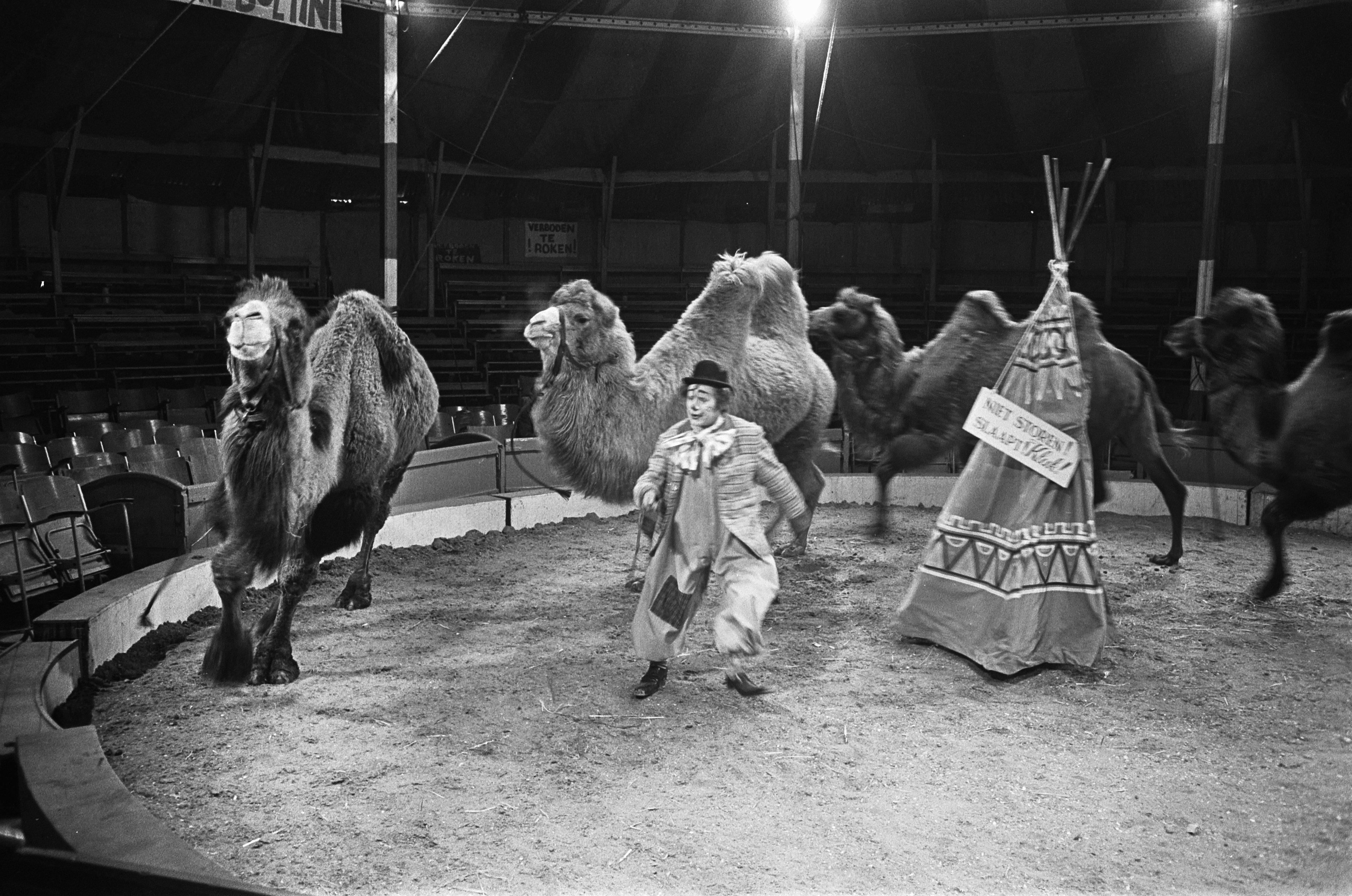 File:Pipo in het circus bij Toni Boltini, Bestanddeelnr 921