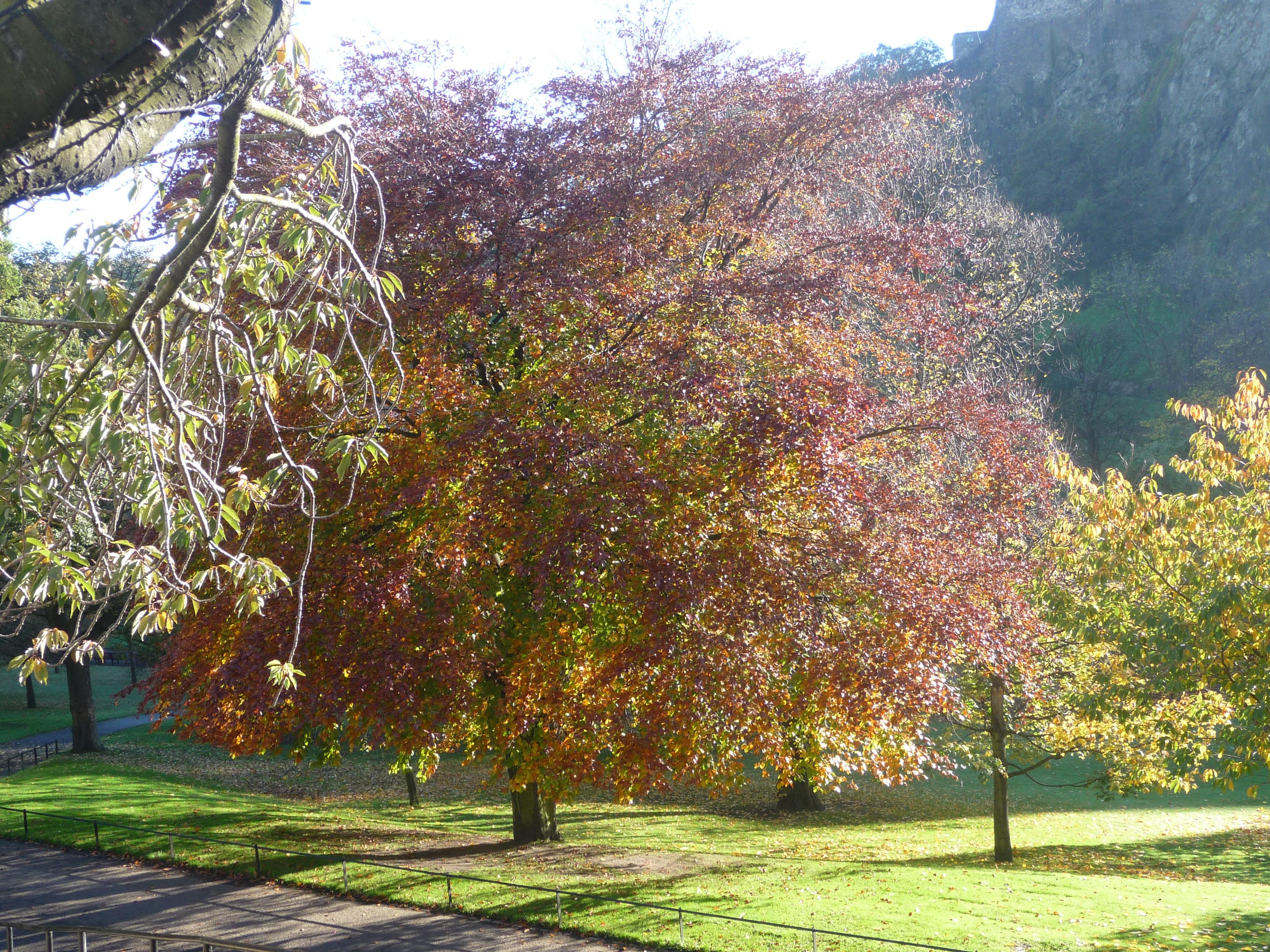 File:Princes Street Gardens, Nov 2011 (6321959283).jpg - Wikimedia ...