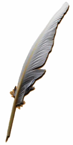 File:Quill pen.PNG