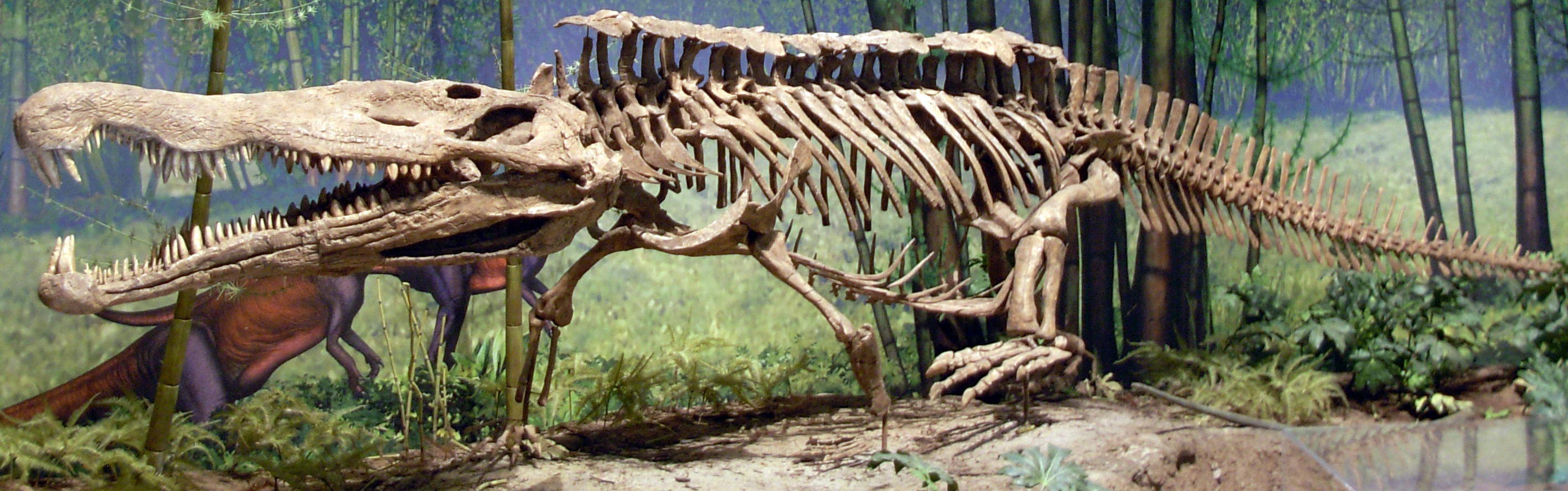 Redondasaurus_bermani_at_CMNH_04.jpg