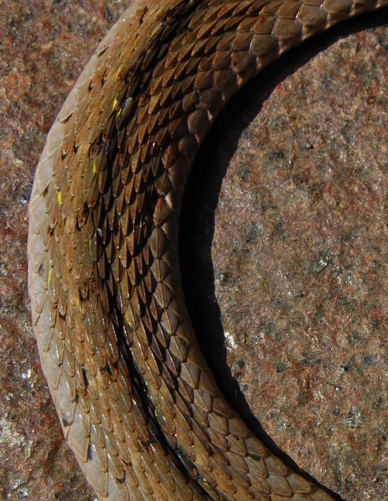 Peninjauan sistem perdagangan ular