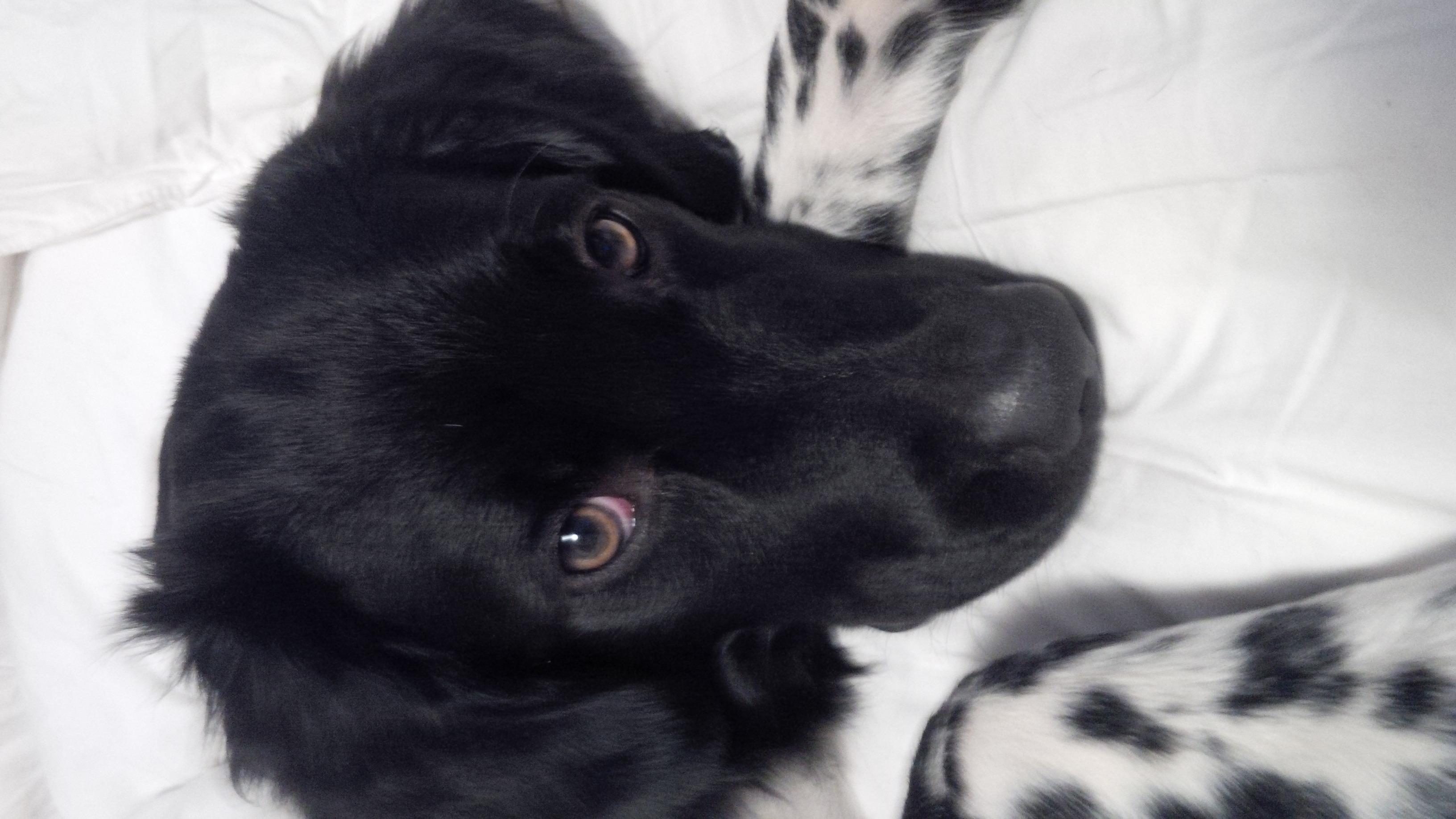 Image Result For Til And Pup