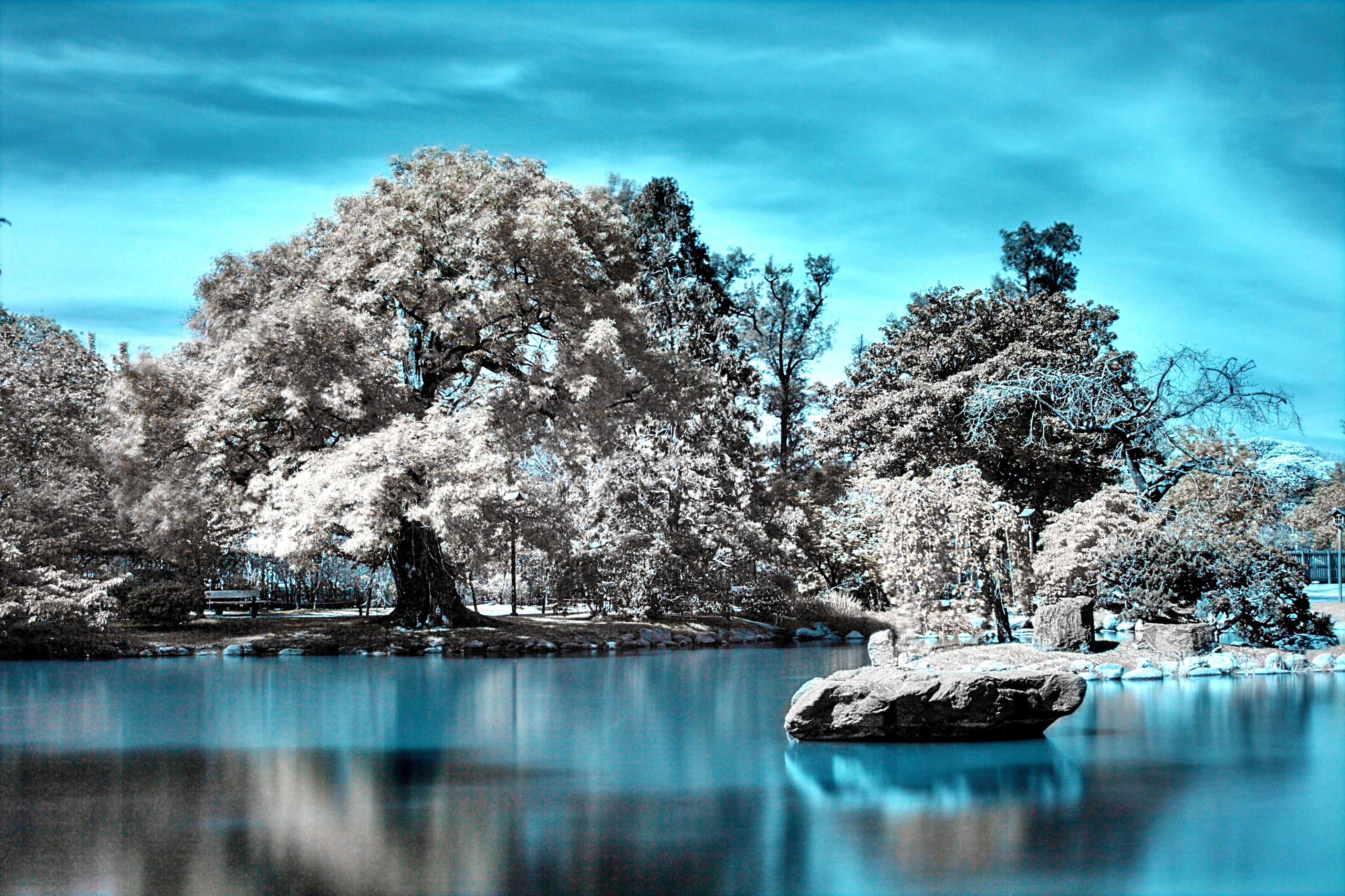 file the japanese garden in infrared jpg wikimedia commons