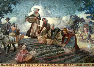 The Shakers harvesting their famous herbs