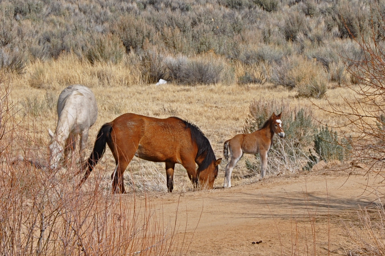 Wild Horse sales tax calculator