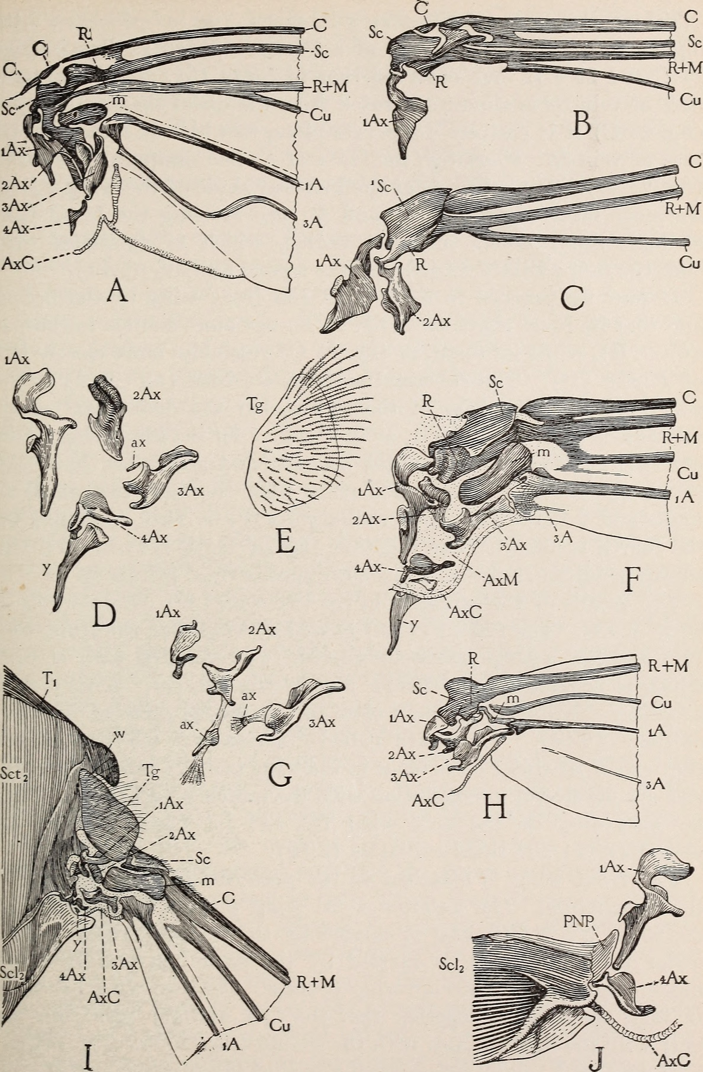 File:The anatomy of the honey bee (1910) (18168042686).jpg ...