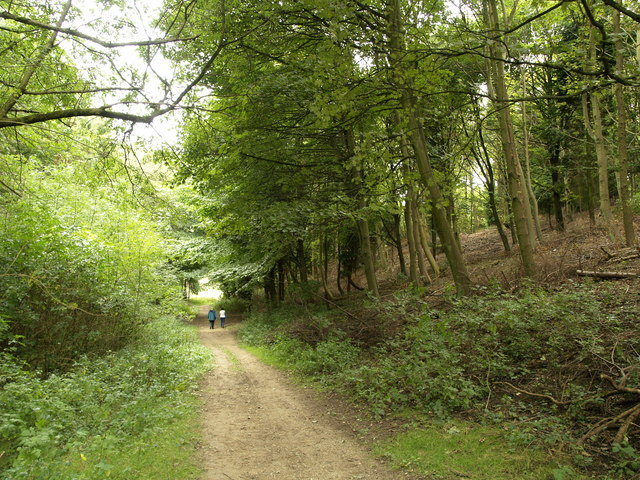 The path through Dale Plantation - geograph.org.uk - 565123