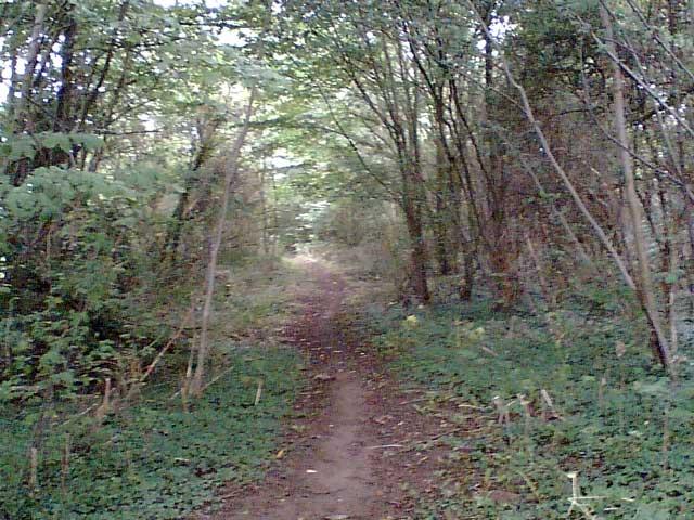 Woodland on the Cuckoo Way - geograph.org.uk - 48703