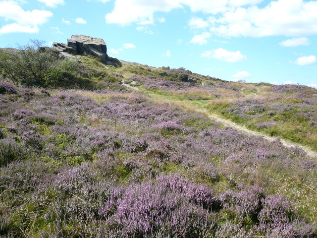 Ashover Rock (Farhill) - Surrounded by Heather - geograph.org.uk - 519331
