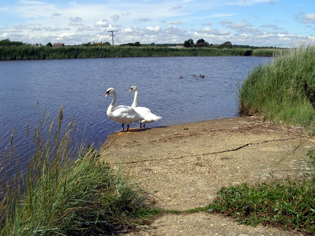 Balancing pond at the end of Avon Water, Keyhaven - geograph.org.uk - 503254