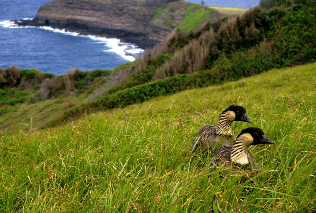 Wildlife On The Big Island Of Hawaii