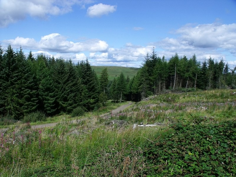Carron Valley forest - geograph.org.uk - 2035430