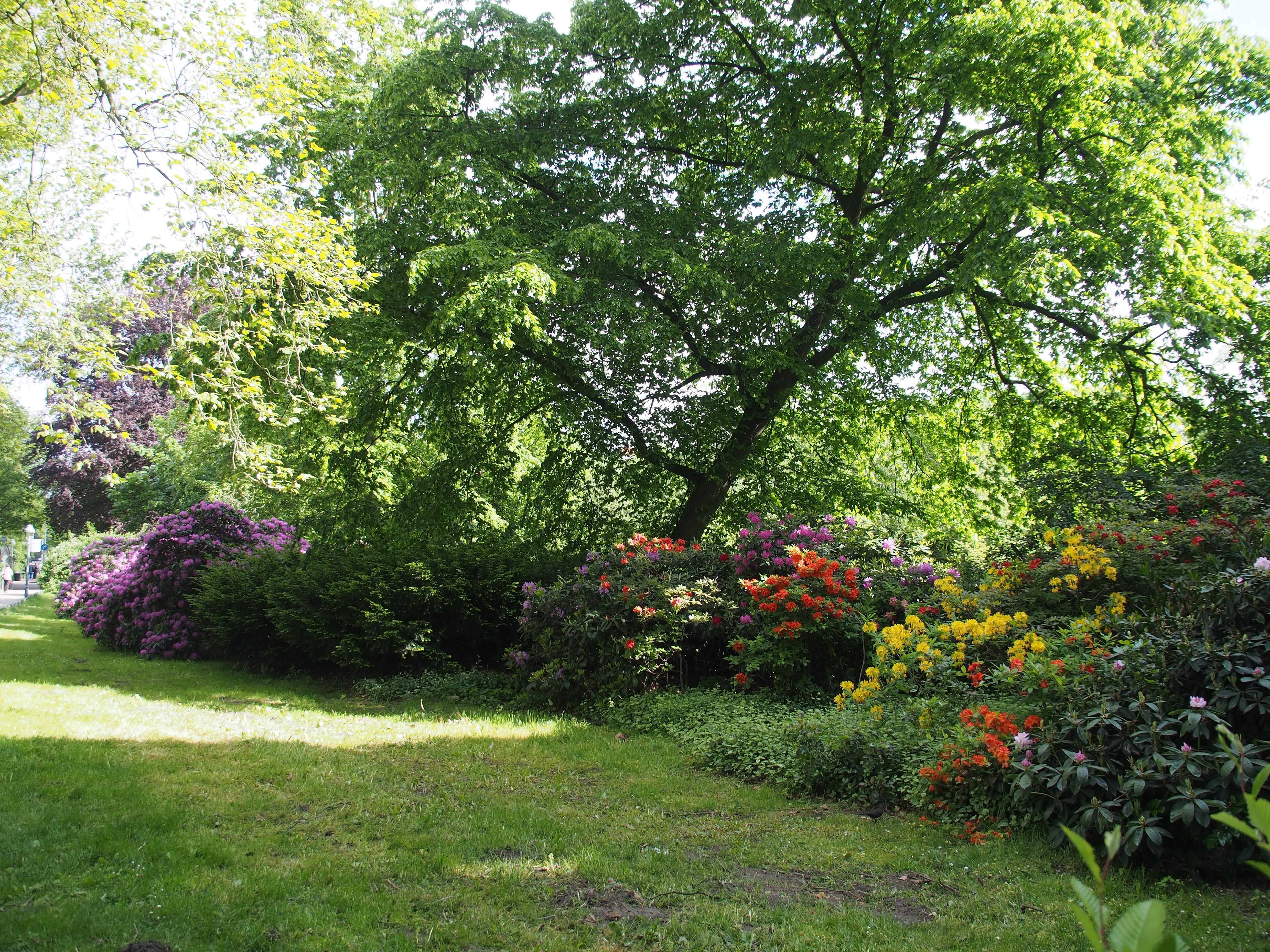 Filecelle Französischer Garten Rhododendrenjpg Wikimedia Commons