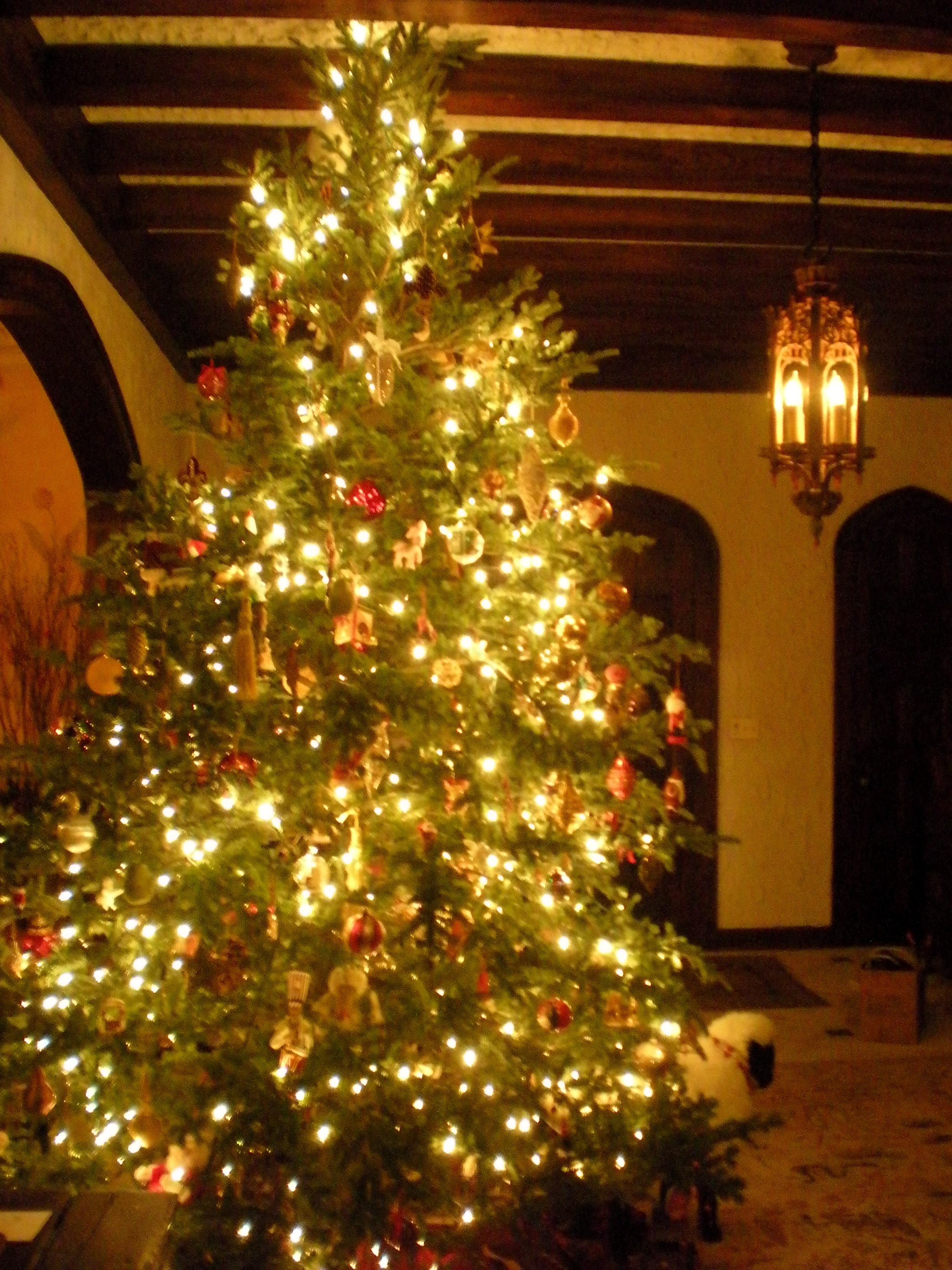 File:Christmas Tree.JPG  Wikimedia Commons