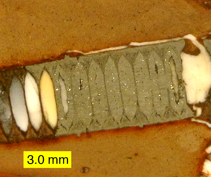 Crinoid stem replaced with marcasite.JPG