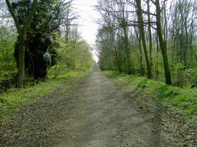Entering Chicksands Wood From Appley Corner - geograph.org.uk - 400472