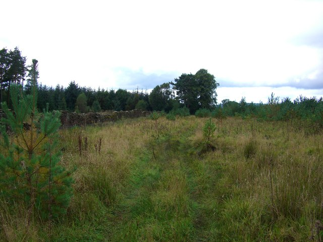 Faint track on the edge of woodland in Whinfell Forest - geograph.org.uk - 566785