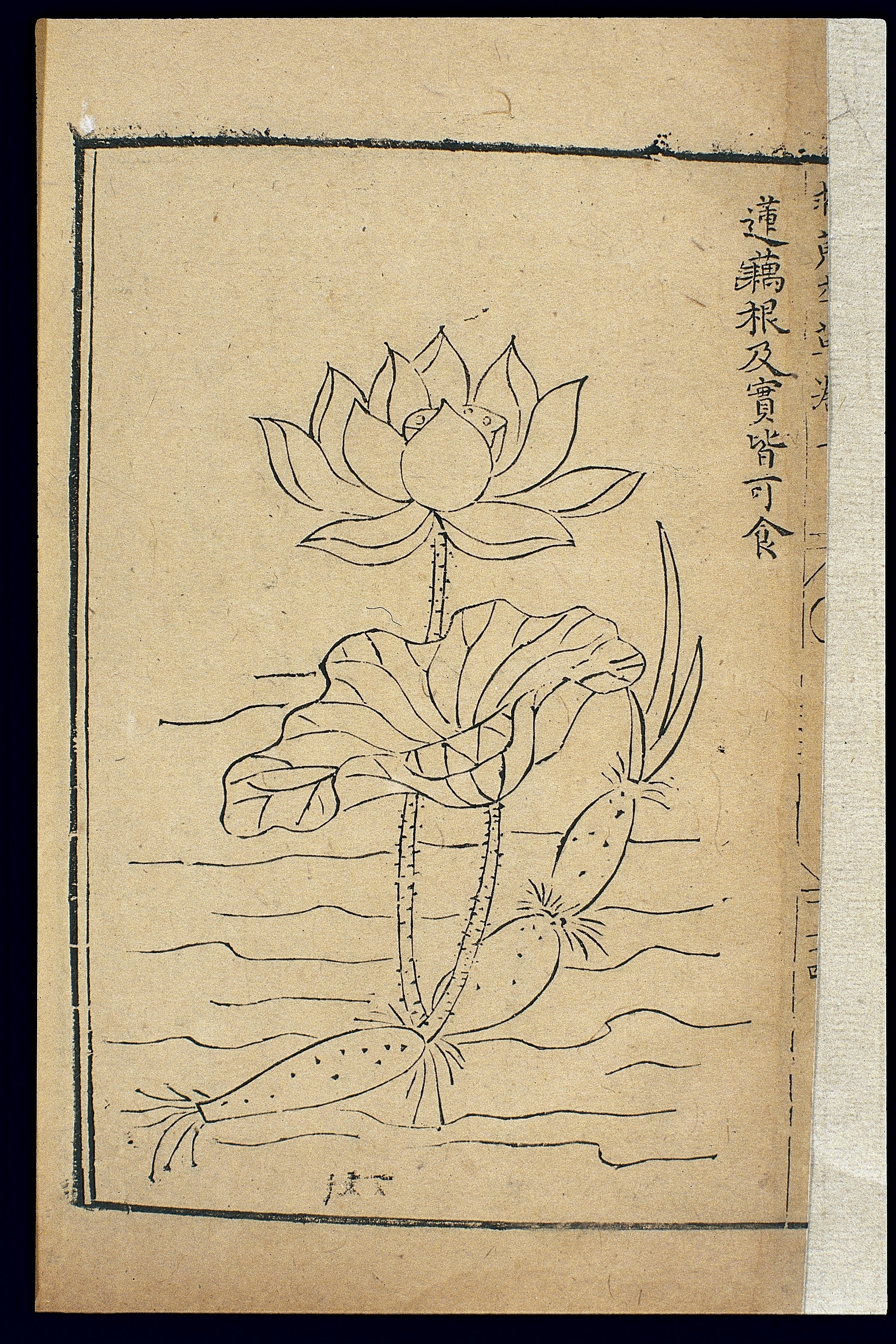 File Famine Relief Herbal 1593 Lotus Root Wellcome