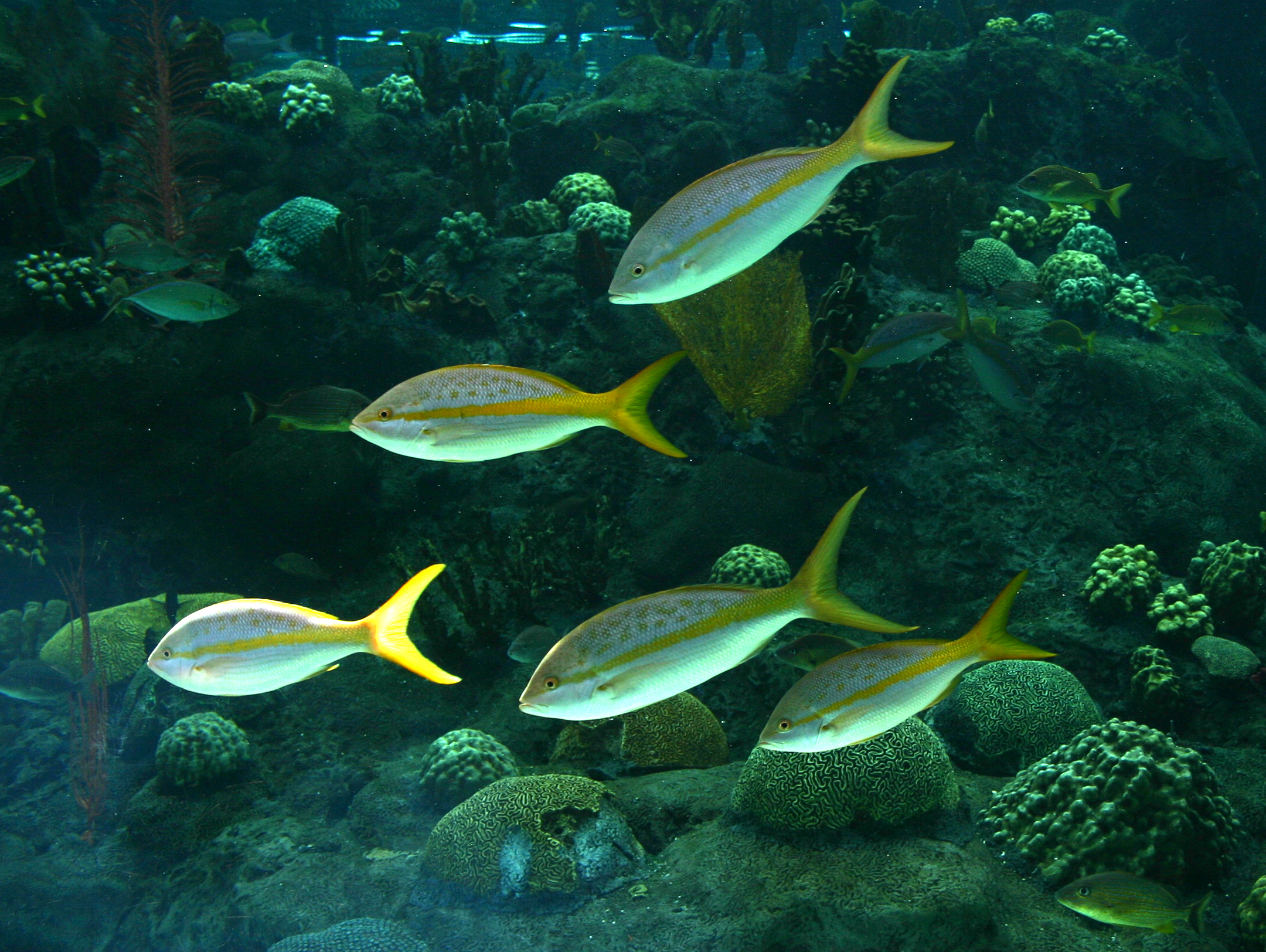 The Florida Aquarium is a (c)(3) not-for-profit organization, publicly operated institution located in Tampa, Florida, United ticketfinder.ga is a large scale, ,square-foot (23, m 2) aquarium and is accredited by the Association of Zoos and ticketfinder.ga means they are a leader in conservation and education, supporting programs for wildlife and having a strong educational component in.