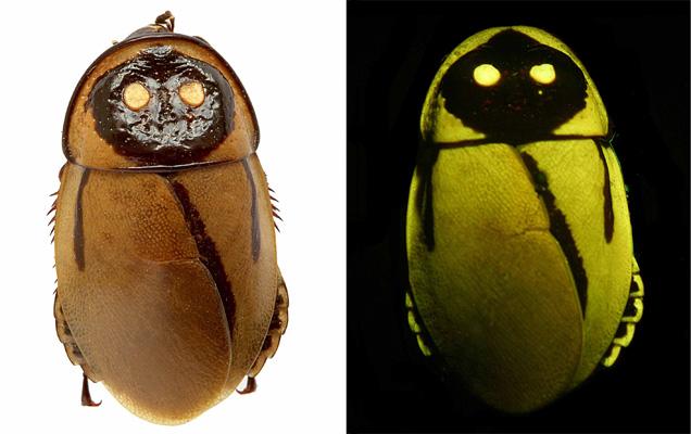 [Image: Glowing-roaches.jpg]