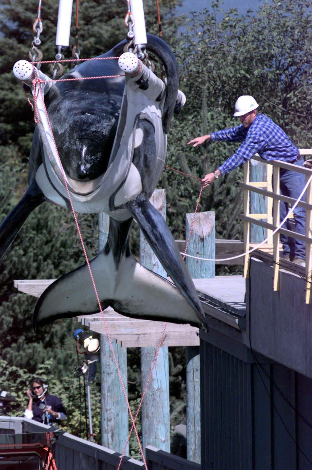 Killer Whales Newport Beach