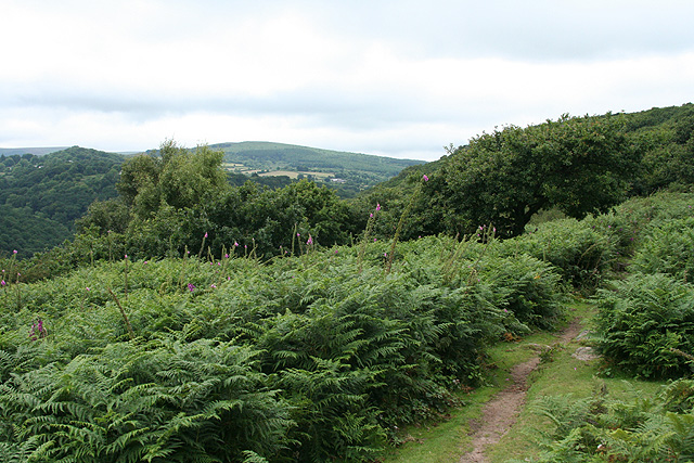 Lustleigh, path to Hunter's Tor - geograph.org.uk - 884392