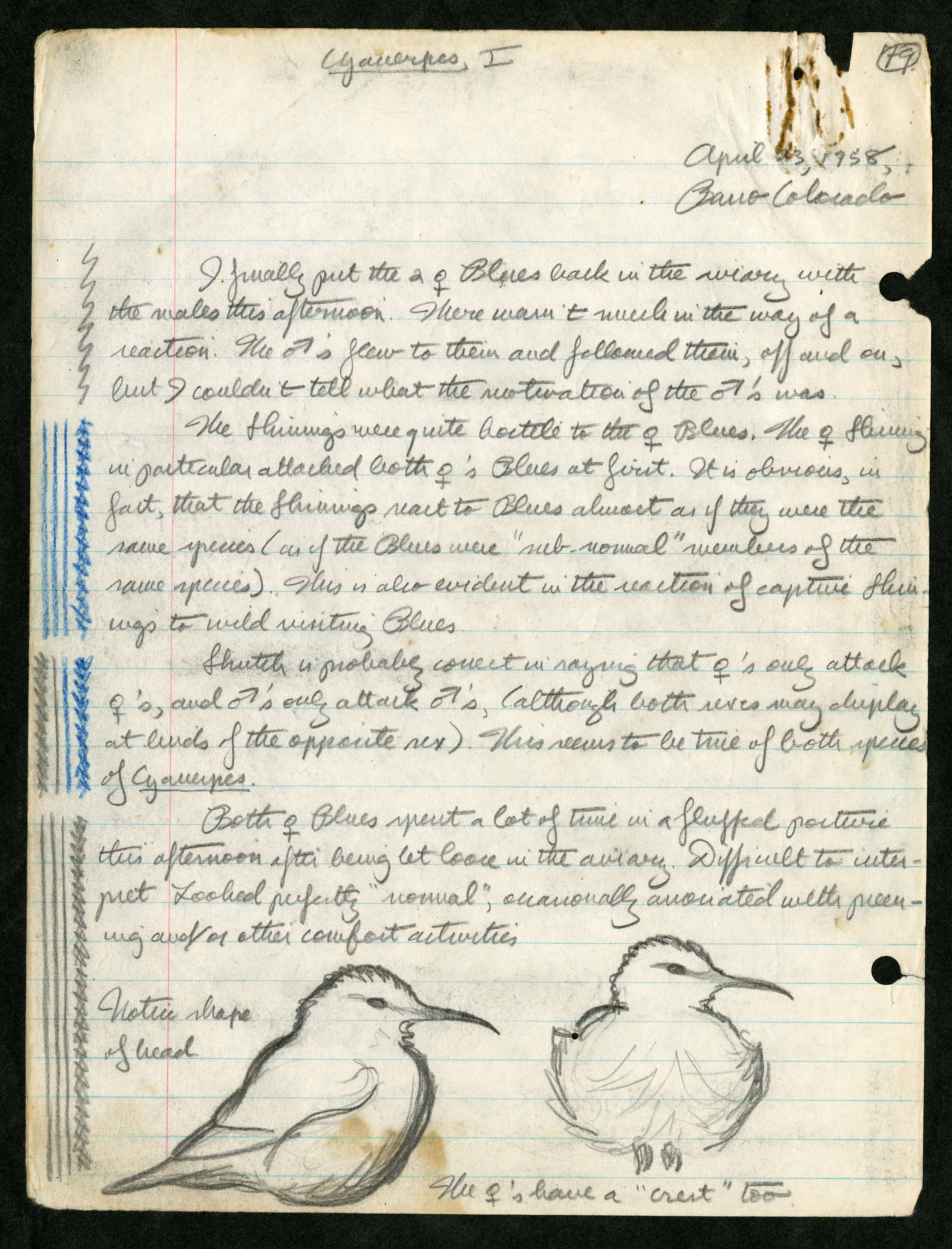filemartin h moynihans field notes on cyanerpes panama
